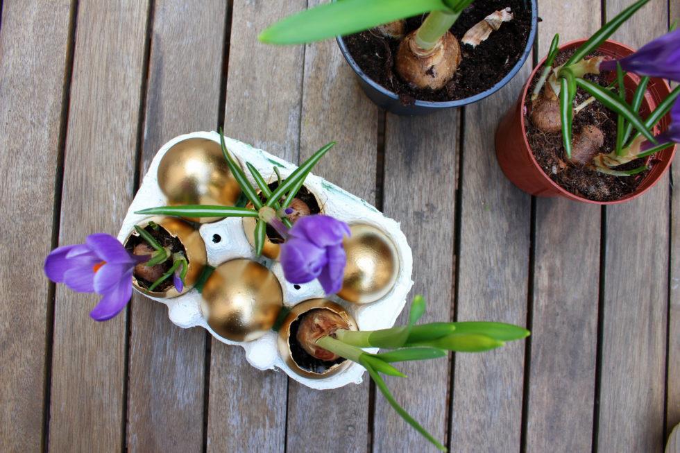 Bepflanzte goldene Eier - Osterdekoration